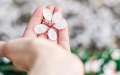 Cogli il fiore di ogni età: menopausa e osteoporosi